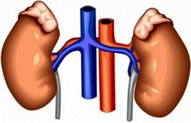 NATURAL REMEDIES AND NUTRITION WILL IMPROVE THE WORK OF KIDNEYS