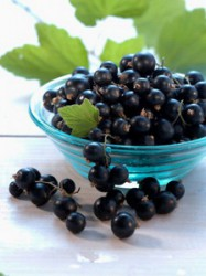 CURRANTS ARE DISEASES NOT HAVE