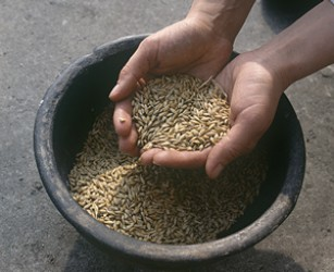 GERMINATED SEEDS ARE A SOURCE OF VITAMINS