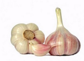 HOW TO SAVE THE HEALING PROPERTIES OF GARLIC