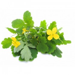 CLEANSING BREW OF CELANDINE