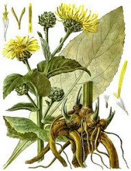 MILLIPORE TREAT JUICE BURDOCK AND KVASS FROM INULA