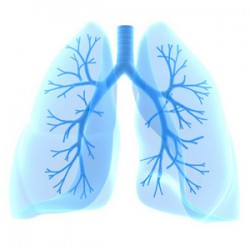HERBAL TINCTURES AND NUTRITION IN PULMONARY SARCOIDOSIS