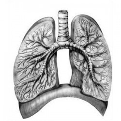 PULMONARY HYPERTENSION TREATED WITH HERBAL REMEDIES