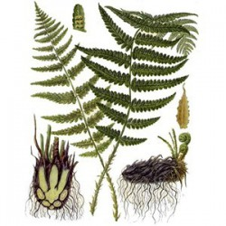 FERN - AGAINST VIRUSES AND PARASITES