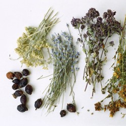 HERBAL INFUSIONS WILL BENEFIT FROM THE ACCUMULATION OF GASES IN THE INTESTINE