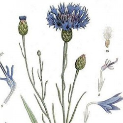 EYE HEALS CORNFLOWER, AND GOUT - LETTER